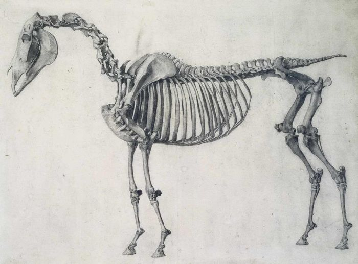 Animals In Art George Stubbs