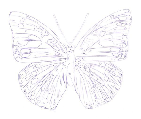 Drawing a butterfly step 4