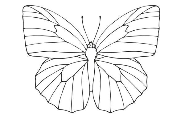 Drowings Imags: How To Draw A Butterfly
