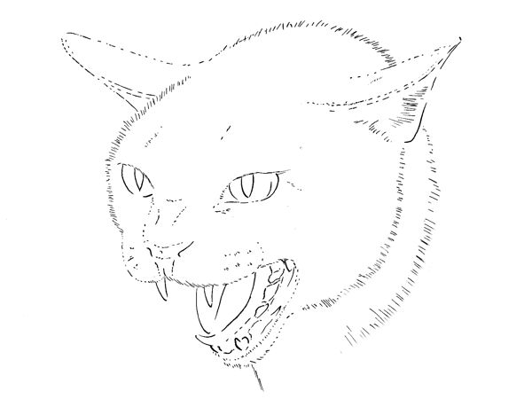 Drawing a cat step 2