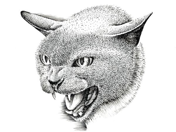 How to Draw a Cat with Pen and Ink