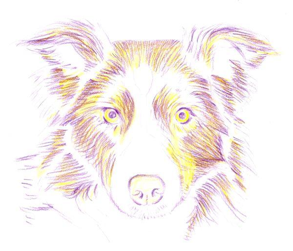 рисунки карандашами цветными поэтапно: