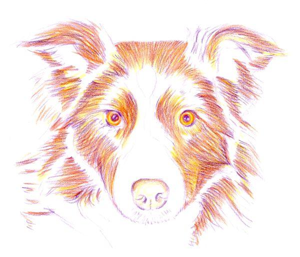 Рисуем шерсть собаки