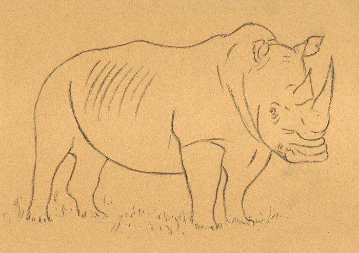 Line Drawing Rhinoceros : How to draw a rhino