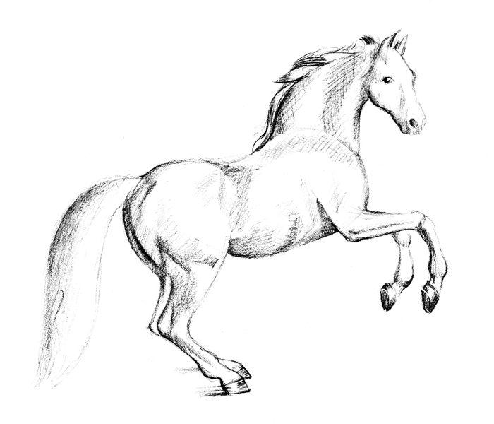 Рисуем лошадь - тон
