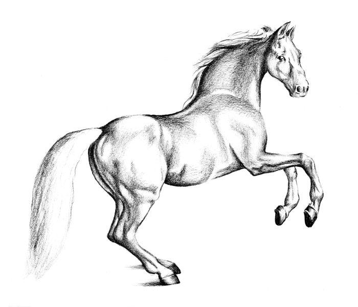 Life In the Desert: June 2013  |Horse Art Drawings