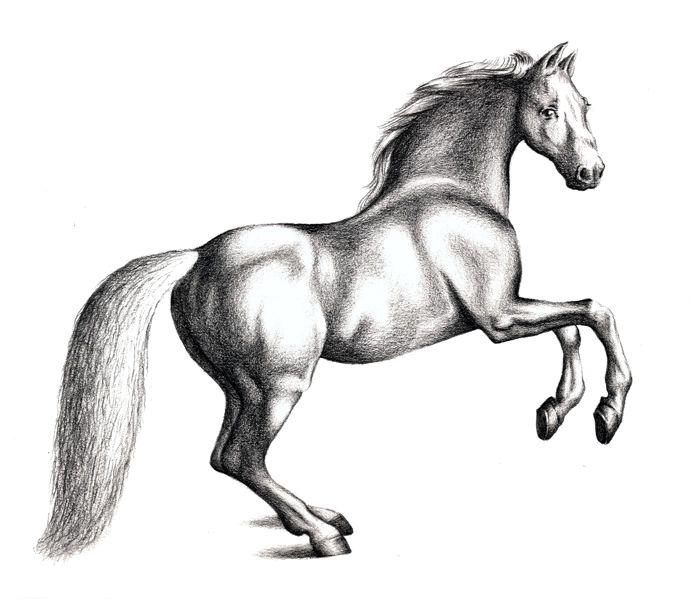 Как нарисовать лошадь - последний этап