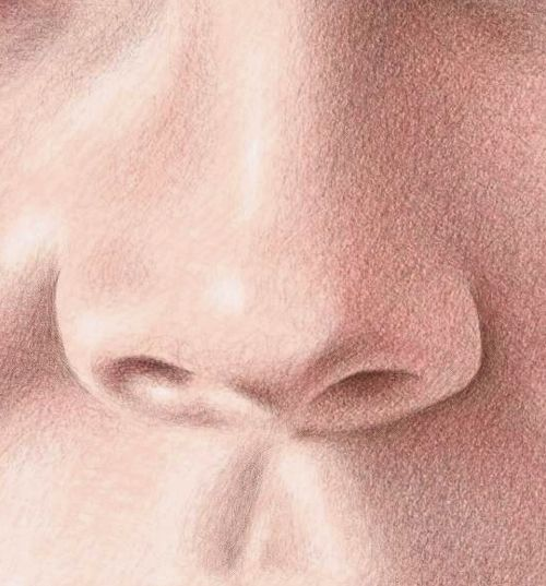 Pencil portraits how to draw the nose color pencil portraits how to draw the nose ccuart Image collections