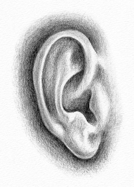 Drawing the Ear - Teach Yourself to Draw Faces