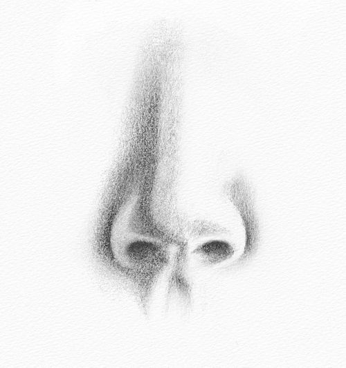 Line Art Nose : Pencil portraits how to draw a nose