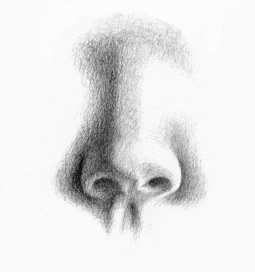 Pencil portraits how to draw a nose how to draw a nose step 3 ccuart Image collections