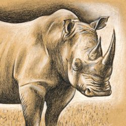 Drawing a Rhino