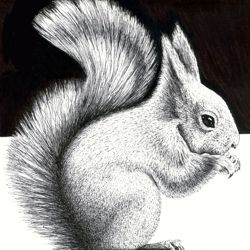 Drawing a Squirrel